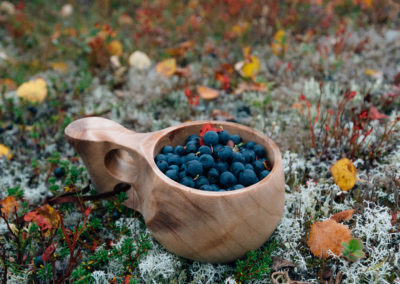 Cup of blueberries in nature from the side